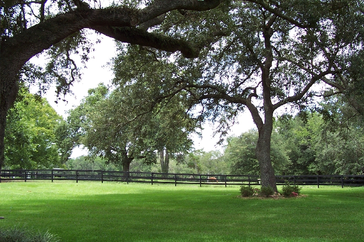 4 acres farm for Nice trees for front yard